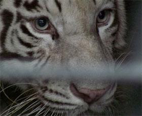 Changsha Zoo
