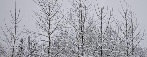 Snowy Fun in 2012