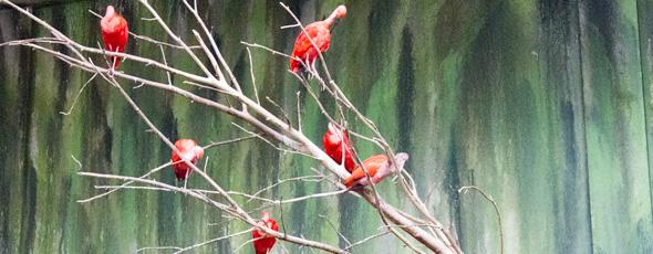 Bird Kingdom