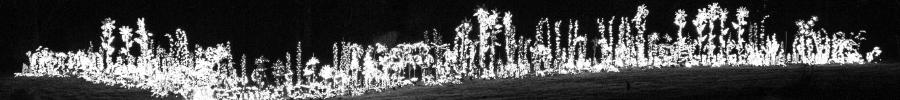 Garden d'Lights 2015